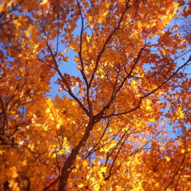 Another amazing #fall day. Blue skies, crisp breeze, and amazing color in the #leaves. It's too bad it only happens once per year, but that also makes it special. Take some time to enjoy it!