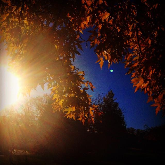 November 4, 2014 (3:28 pm)